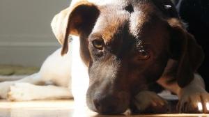 My dog Mydee Bonez.