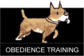 Dog Training Boston - Testimonials