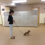Dog Training Class1