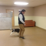 dog training class2