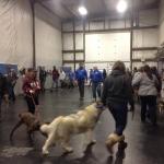 dog training workshop1